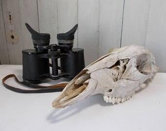Vintage Deer Skull