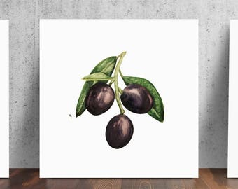 Olive Branch Black Olives Art Print from Original by Cat Paschal Dolch