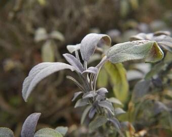 SALE 1/3rd off Wild Medicine - January Digital Edition Herbal Medicine, Foraging, Eco Living