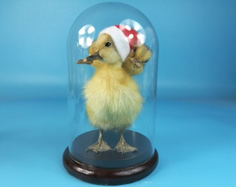 Home decoration taxidermy of 3 headed freak duckling mounted in glass dome,