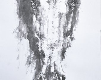 Horse Portrait, Original Graphite Drawing of a Horse Head, Contemporary Original Fine Art, Animal Art, Equus, Equine Art