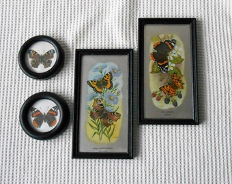 Butterflies Art Framed Collection Paper Art Science Specimen Cottage Chic  4 Piece