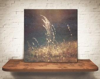 Golden - multiple sizes fine art photo - sunflare nature field gold grass sunshine - free U.S. shipping