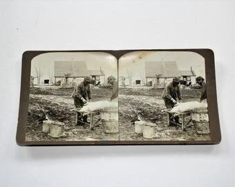 Antique Stereoview Card Farm Scene Hog Slaughtering Handmade