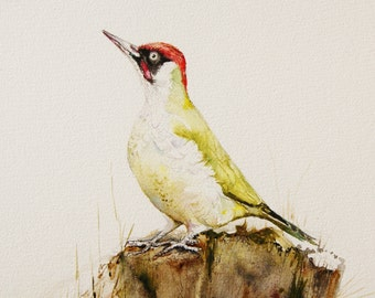 Green Woodpecker painting-watercolor original