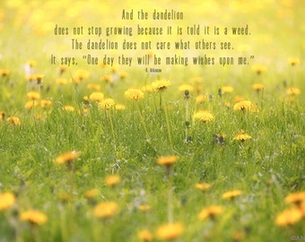 Yellow Dandelion Print, Typography, Type, Text, Quote, Country Field of Yellow Dandelions, Inspirational Quote, Message, Wishes Upon Me, Art