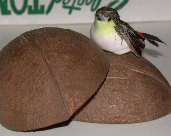 set of coconut halves and swallow