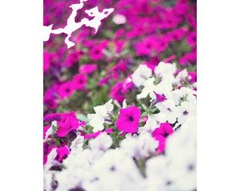 SALE, Spring decor, canvas art, flower photography, white art, white wall art, Vermont art flower print flower wall art canvas wall art