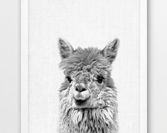 Llama Print, Alpaca Lama Photo, Cute Animals Black White Photography, Animal Print, Baby Shower Nursery Gift, Kids Room Printable Art Decor