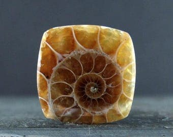 Gorgeous Square Ammonite ,Natural fossil, Jewelry makings supplies B6715
