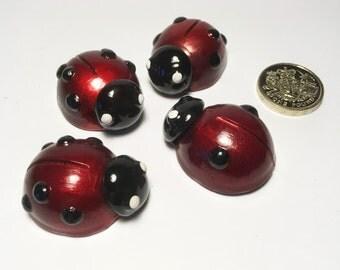 Six-spotted Ladybird, Ladybug, Red Ladybird