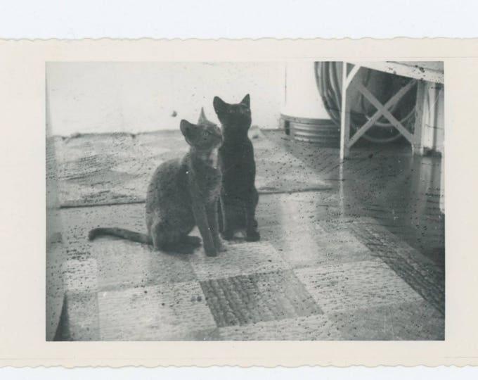 Vintage Snapshot Photo: Expectant Cats, c1940s (73562)