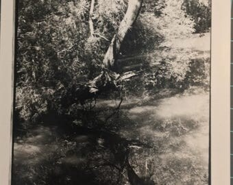 Photography 35mm Black and White Photos Landscape Tree Portraits