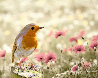 wildlife print, robin print, wildlife art, wildlife photography, bird print, bird art, bird wall art, wildlife décor, nature print,