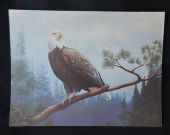 "eb2146 Vintage Beautiful Print of American Bald Eagle 14"" x 10-5/8""....Heavier weight paper."