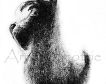 Scottie  Dog  Art Print