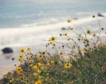 California Beach Photography, Malibu Photography, California Wildflowers, Native Wildflower Photography, Sunflower, Pacific Coast Highway