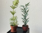 "Dollhouse Miniature Set of Green Plants 1"" Scale  (BL)"