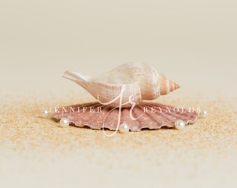 Sea Shell Bowl Backdrop, Shell Digital Prop, Beach Backdrop, Background for Newborn Photography