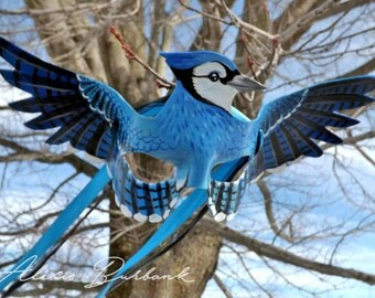 Blue Jay Masquerade Leather Mask