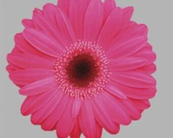 ADGR)~REVOLUTION NEON Rose w. Dark Eye Gerbera Daisy~Seed!!~~~~~Lovely & Lively!