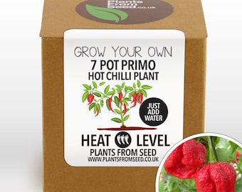 Grow Your Own Primo Chilli Plant Kit
