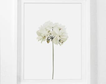 Flower Print, White Flower, Flower Art Print, Spring Flowers, Flower Digital Art, Flower Prints Wall Art, Floral Wall Art, Floral Wall Decor