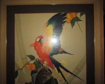 Vintage Macaw by Stark Davis in Frame Print