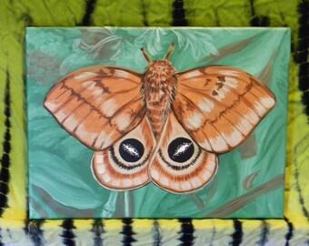 10 Moth painting