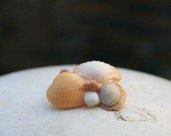 Handmade Seashell Brooch