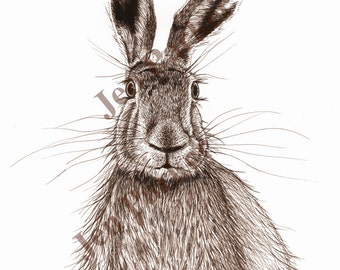 Hare Pen Drawing Giclée Print A4