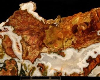 Gorgeous Uncommon White Fir Jasper Agate Slab