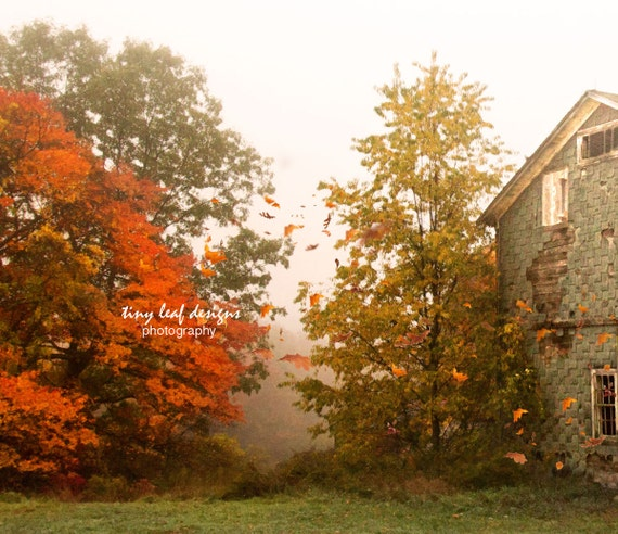 Foliage at Shaw Farm - Sutton, MA Original Photography