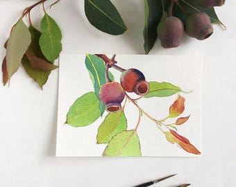 Original art: small painting (5x7 inches) of gum nuts - original watercolour painting - australian nature art - gum tree branch painting