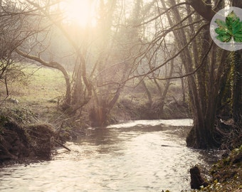 By the stream, A4 photography print, Damery, Gloucestershire landscape sunlight