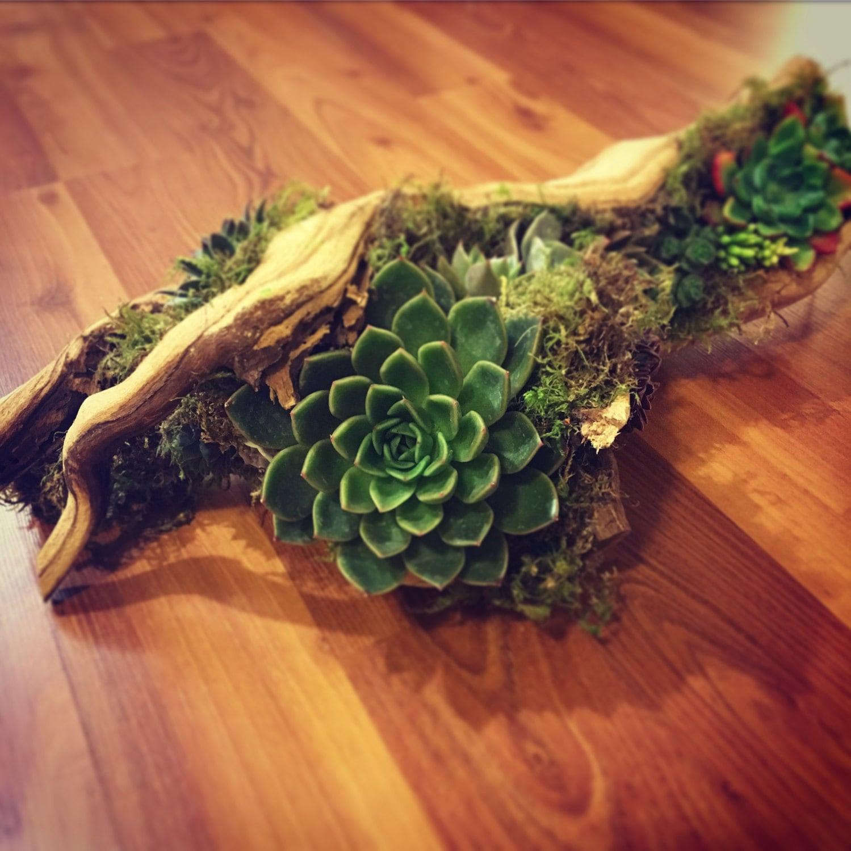 Large Driftwood Succulent Arrangement Available With Faux