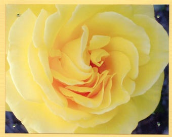 Yellow Rose Photo Card, Yellow Flower Card, Yellow Floral Card, Inspirational Note Card, Gift Set for Mom