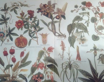 "Chromolithograph ""Houseplants I."""
