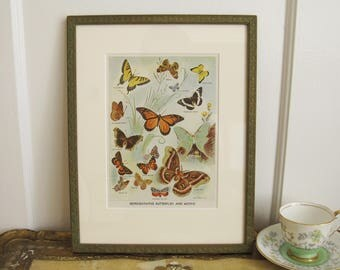 Vintage Framed Print Butterflies and Moths Insects Paper Ephemera Green Ready to Hang