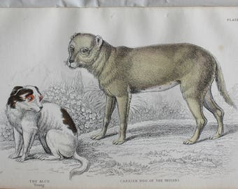 old etch of the alco dog and a carrier dog of the indians, 1840