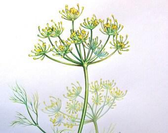 Dill ORIGINAL watercolor, still life,Kitchenette art, botanical art, illustration, wall decor