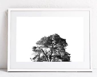 tree print-minimalist art print-black and white wall print-Nature Art-DIGITAL DOWNLOAD PRINTABLE Art-landscape photography print-20x30, a2