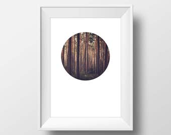 Forest picture, Jungle poster, Landscape poster, Trees, Abstract photo, Minimalist poster, Digital art, Download