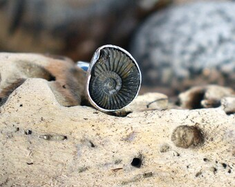 Ammonite ring, fossil ring, unusual ring, handmade silver ring, UK size S ring, No. 20 size ring, US size 9 ring