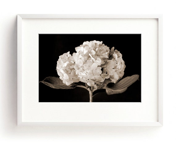 Black And White Floral Wall Decor : Hydrangea print floral wall art black and white