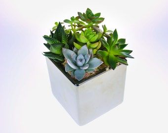 Beautiful Succulent Plant Arrangement in Mirror Cube Planter, DIY Kit with 6 living plants, a perfect gift for the home