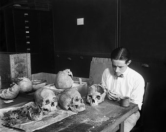 Scientist Examining Skulls Photo, Anthropology, Black White Photography, Science Lab, Wall Art, Oddities, Rustic Home Decor,