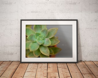 Succulent Photography- Photography-Mothers Day Gift-Hipster Wall Art-Art-Unique Photography-Wall Art-Home Decor-Plant Photography-Boho Art