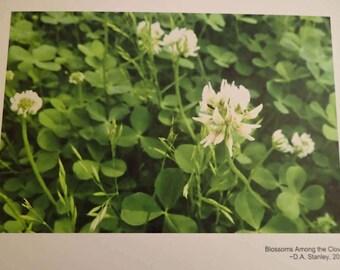 Blossoms Among the Clover (8x10 Art Print)