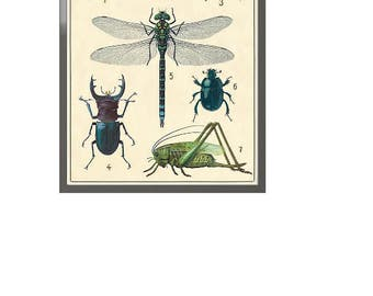 Insects Framed Art